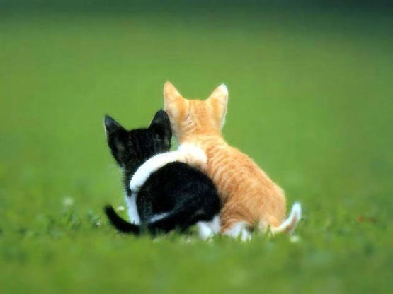 cats-hugging-11162010-26